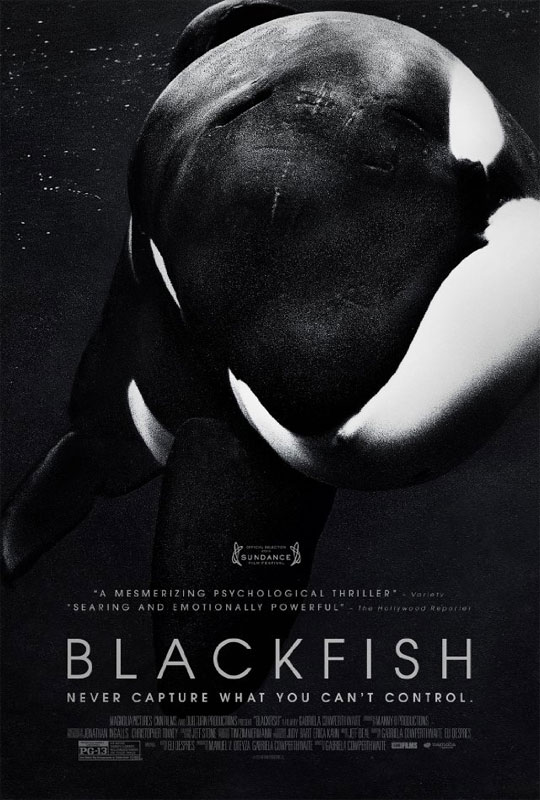 Worries over the safety of mixing killer whales with human trainers in the same tank of water at SeaWorld are, of course, not unfounded.  There have been numerous incidents – besides Brancheau's death – as seen in BLACKFISH.